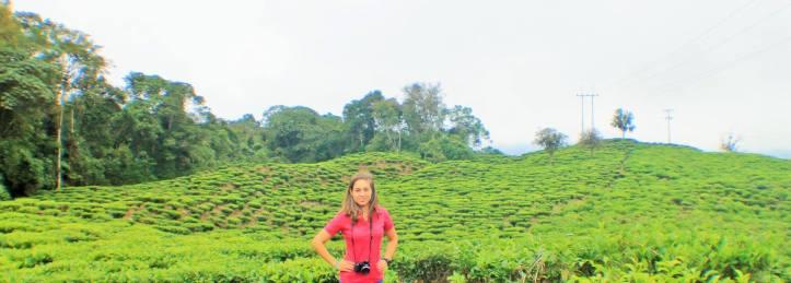 Fincas de té Bitaco Colombia
