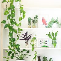 5 Plantas que mejoran el aire dentro de tu hogar