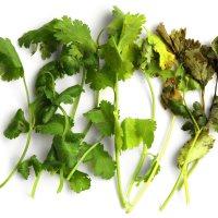 Como hacer que tus especias frescas duren más