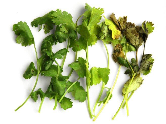 herb-storage-best-
